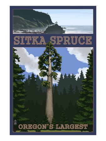 Sitka Spruce - Oregon's Largest - Oregon Coast
