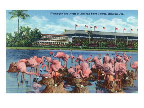 Racetrack With Flamingos