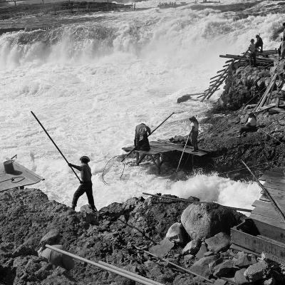 Dip Net Fishing at Celilo Falls, 1954