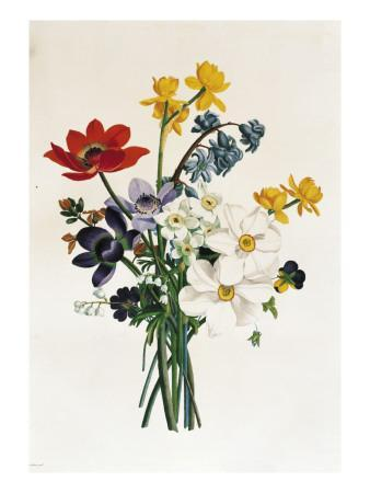 Bouquet of Narcissi and Anemone