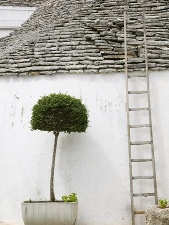 Ladder and Potted Tree, Trulli Houses, Alberobello, Puglia, Italy