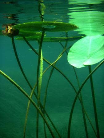 Underwater Thread