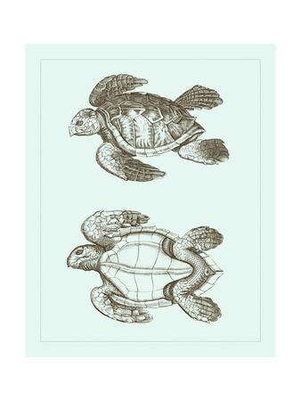 Loggerhead Turtles II