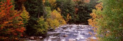 River Flowing Through a Forest, Ausable River, Adirondack Mountains, Wilmington, Essex County