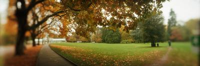 Autumn Trees in a Park, Volunteer Park, Capitol Hill, Seattle, King County, Washington State, USA