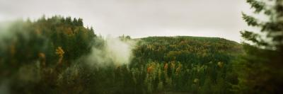 Fog Over Trees in a Forest, Snoqualmie Falls, Snoqualmie, King County, Washington State, USA