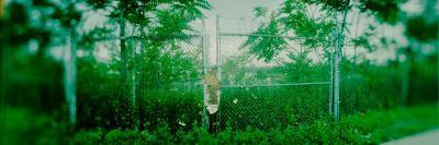 Fenced Off Overgrown Lot, Williamsburg, Brooklyn, New York City, New York State, USA