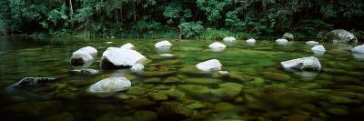 Stream in a Forest, Mossman Gorge, Daintree National Park, Queensland, Australia