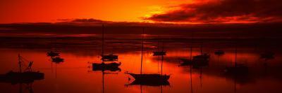 Boats in a Bay, Morro Bay, San Luis Obispo County, California, USA