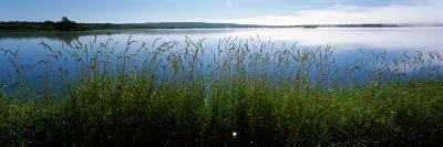 Tall Grass at Riverbank, Cape Breton Island, Nova Scotia, Canada