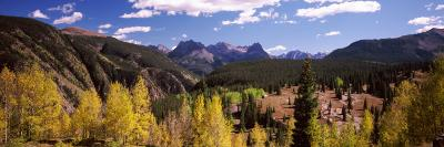 Aspen Trees with Mountains in the Background, Colorado, USA