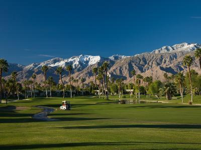 Palm Trees in a Golf Course, Desert Princess Country Club, Palm Springs, California