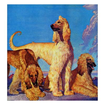 """""""Afghan Hounds,"""" March 18, 1944"""