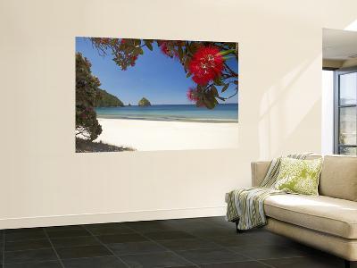 Pohutukawa Tree in Bloom and New Chums Beach, Coromandel Peninsula, North Island, New Zealand