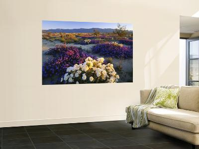 Flowers Growing on Desert, Anza Borrego Desert State Park, California, USA