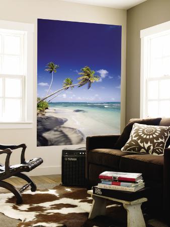 Palm Trees and Long Haul Beach
