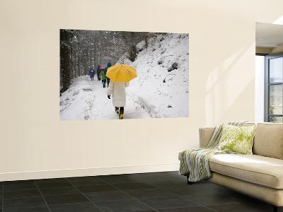 Girl with Yellow Umbrella Walking in Snow and Forest, Jigokudani Monkey Park