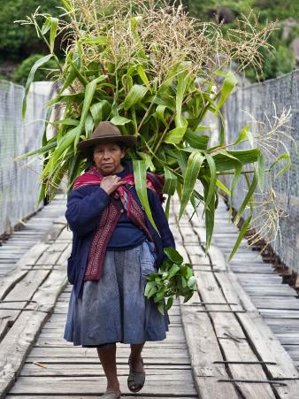 Peru, a Woman with a Load of Maize Stalks to Feed to Her Pigs Crosses the Urubamba River