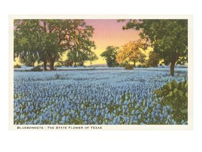 Blue Bonnets, State Flower of Texas