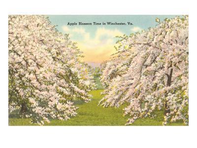 Apple Blossoms, Winchester, Virginia