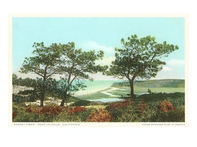 Torrey Pines, San Diego County, California