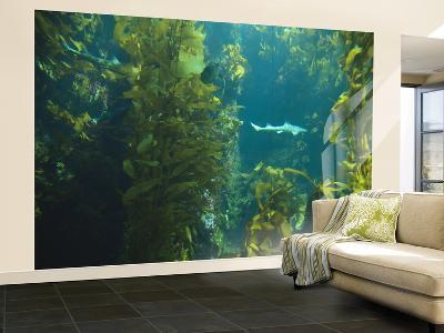 Monterey Bay Aquarium, Cannery Row, Monterey, Central California Coast, USA
