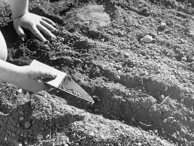 A Child Demonstrating How to Plant Seeds in a Garden