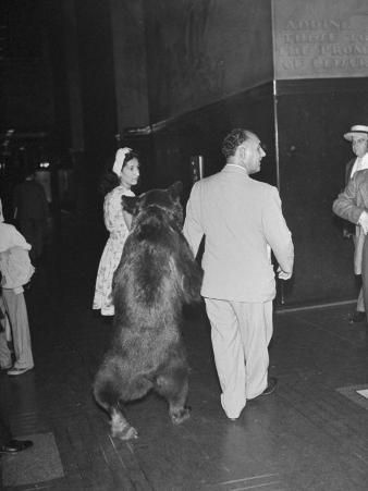 Man Walking with Trained Bear Named Rosie
