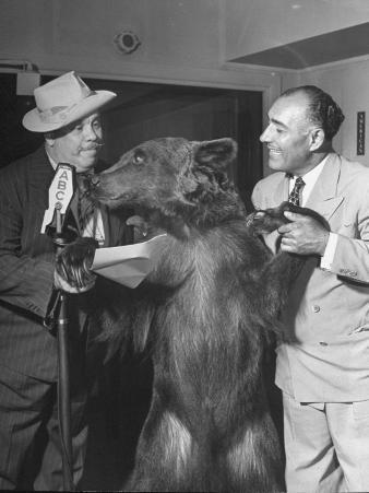 Two Men Doing a Radio Show with a Trained Bear Named Rosie