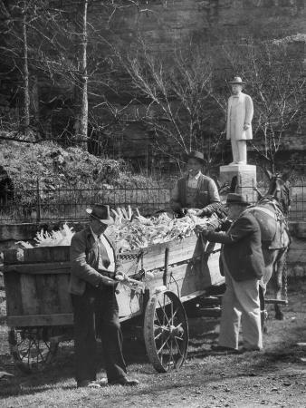 Reagor Motlow and Jess Motlow, Present Owners of Jack Daniels Distillery, Looking over Corn