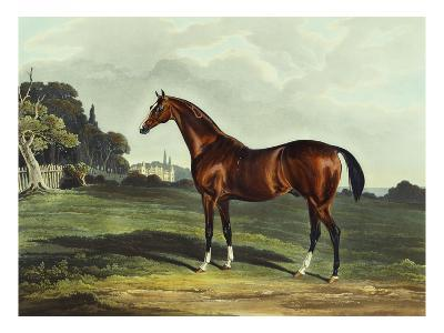 English Racehorses