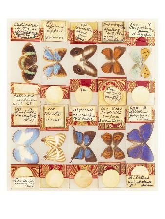 A Collection of Entomological Microscope Slides, Contained in Three Fitted Mahogany Cases, the…