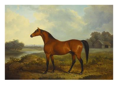A Bay Stallion in a River Landscape