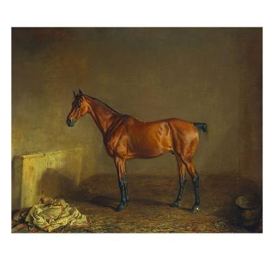 A Portrait of 'Marshall' a Bay Racehorse, in a Stall