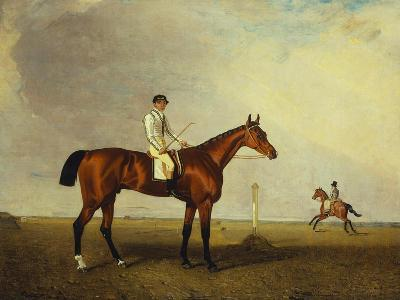 A Bay Racehorse with a Jockey Up on a Racehorse