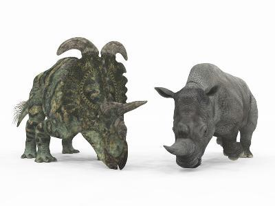 An Adult Albertaceratops Compared to a Modern Adult White Rhinoceros