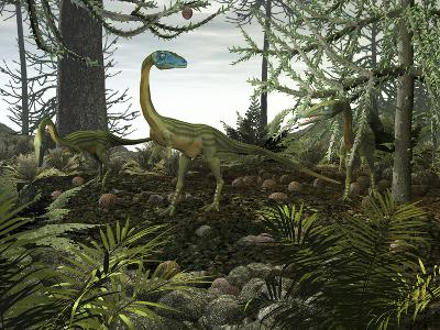 Coelophysis Dinosaurs Walk Amongst a Forest