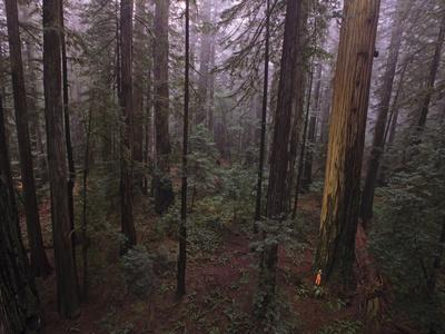 Fire Damage in World's Largest Remaining Old-Growth Redwood Forest
