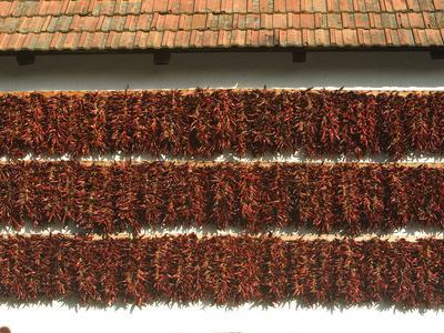 Red Paprika Peppers Hung to Dry on the Wall of a House