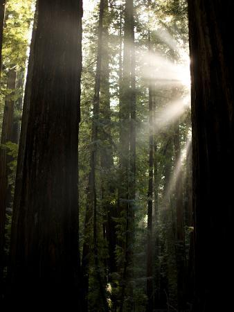 Bull Creek Flats, Home to Many of the Tallest Redwood Trees on Earth