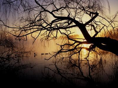 Ducks on Misty Lake Banyoles in Early Morning Light