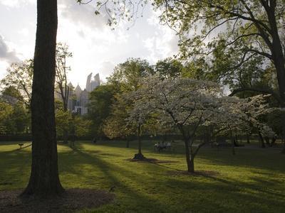 Late Afternoon in Piedmont Park in Midtown, Atlanta
