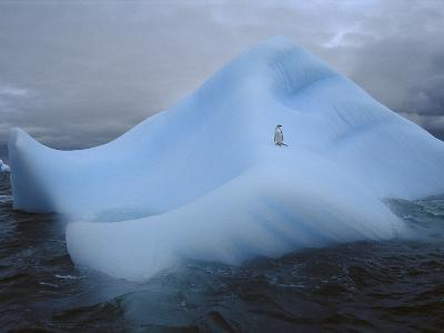 Chinstrap Penguin (Pygoscelis Antarctica) and Water Worn Iceberg, South Orkney Islands, Antarctica