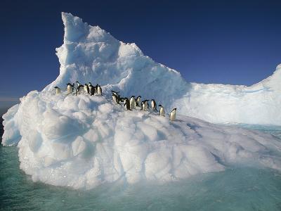 Adelie Penguin (Pygoscelis Adeliae) Group on Sculpted Iceberg, Terre Adelie Land, East Antarctica