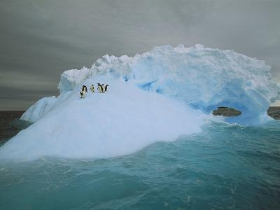 Adelie Penguin (Pygoscelis Adeliae) Riding Sculpted Iceberg, Terre Adelie Land, East Antarctica