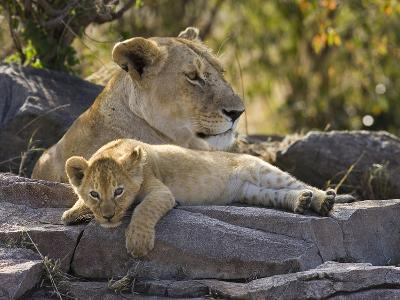 African Lion (Panthera Leo) Cub Resting on Rock with its Mother, Masai Mara Nat'l Reserve, Kenya