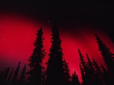 Red Aurora Borealis over Boreal Forest, Alaska
