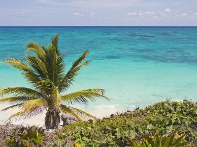 A Palm Tree on the Coast of the Yucatan Peninsula Near Tulum, Mexico