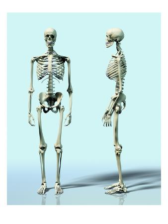 Two Skeletons