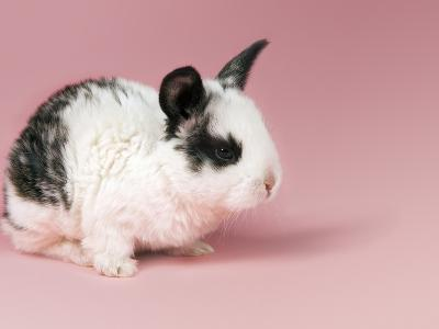 Rabbit with Black and White Fur